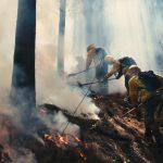 Incendio forestal en Sagrada Familia: Control avanza sobre el 80% con 500 hectáreas afectadas